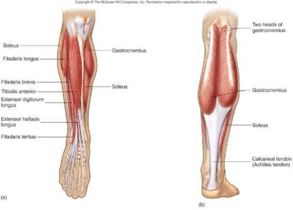 muscolo popliteo infiammato