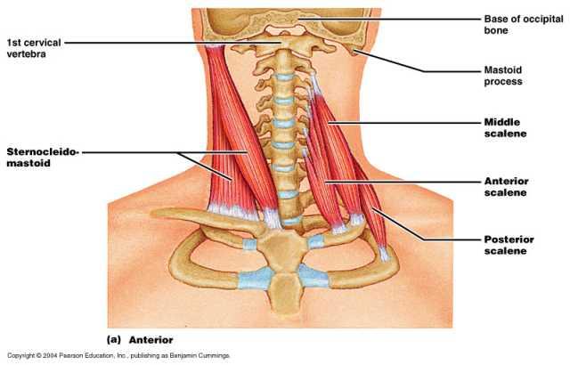 Trauma di reparto cervicale di una spina dorsale al bimbo
