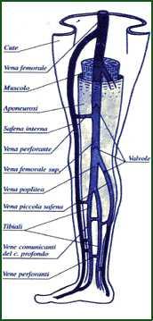 Dolore e posizione di vene